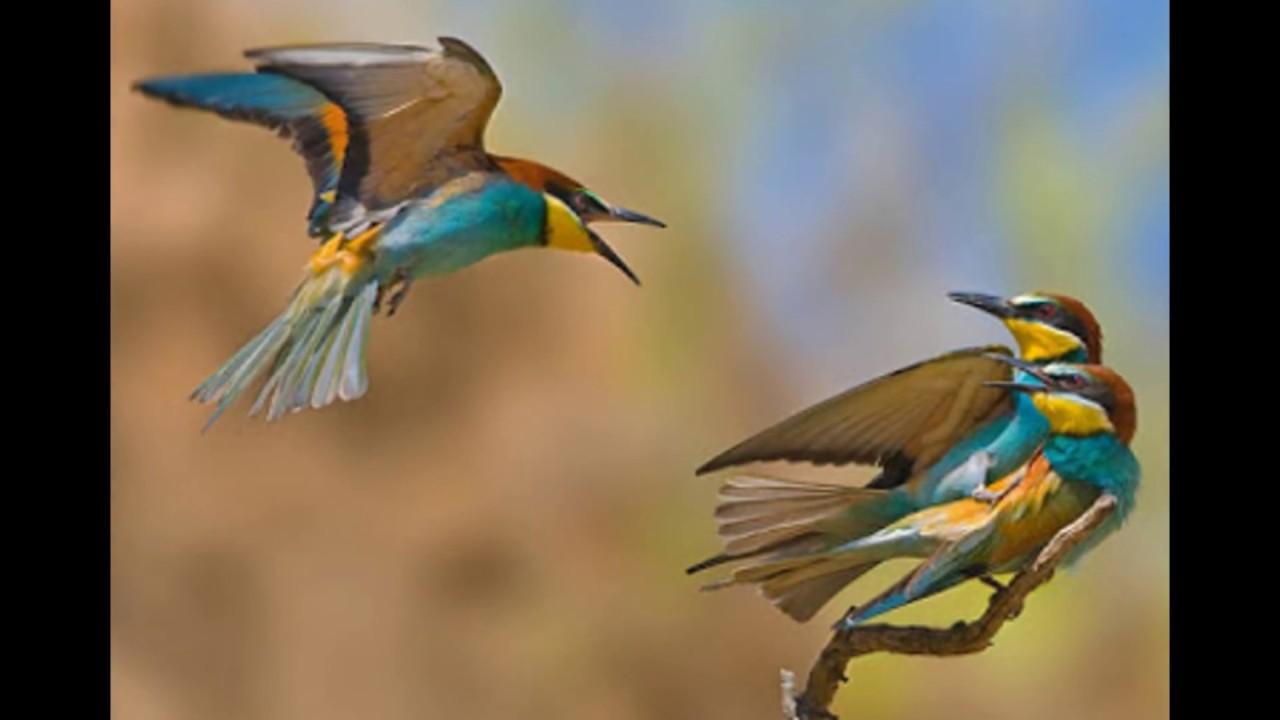 صوره صور عصافير , شاهد جمال العصفور سبحان الله