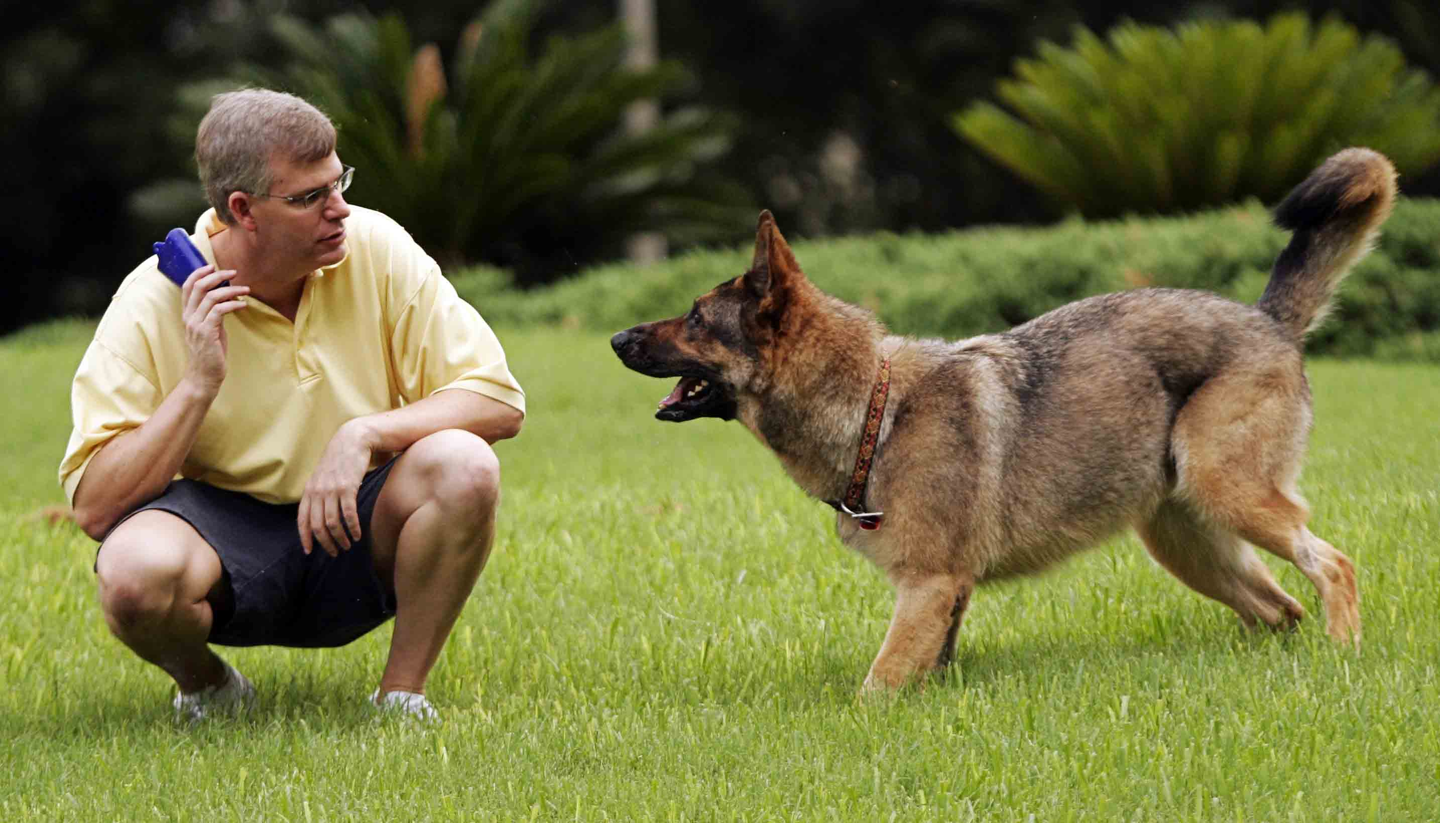 صور كيفية تدريب الكلاب , كيف تجعل الكلب ينفذ اوامرك