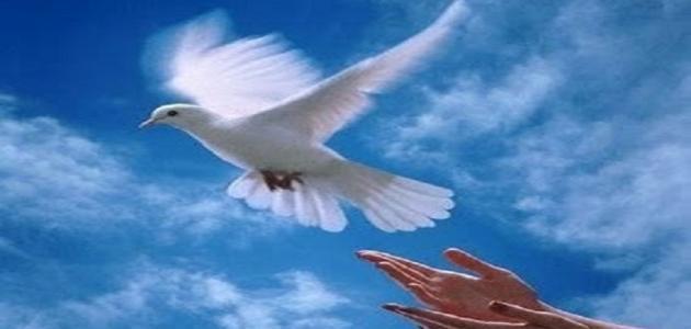 صوره موضوع تعبير عن الحرية , كلام جميل عن الحرية