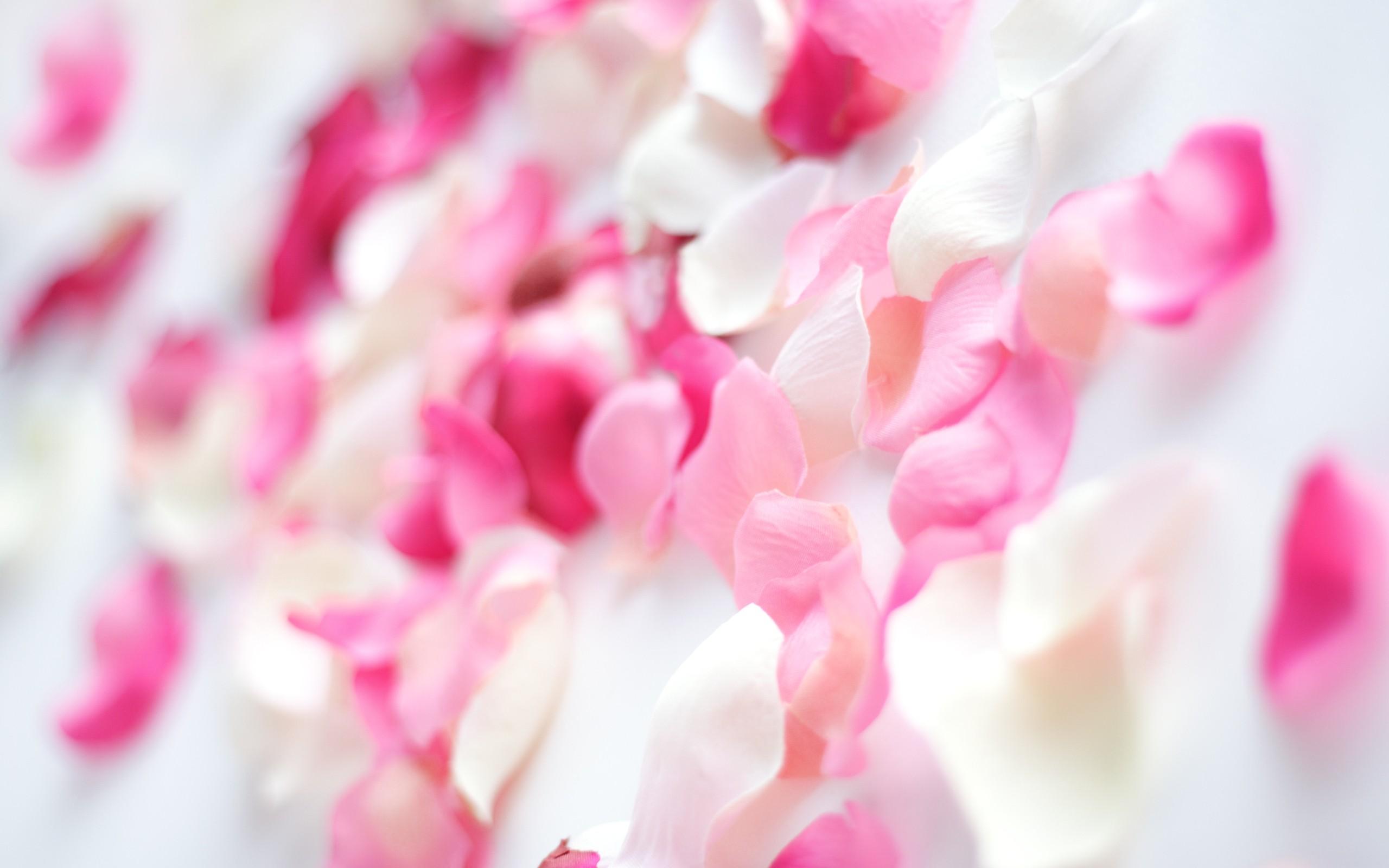 صورة خلفيات وردي , صور جميله بينك