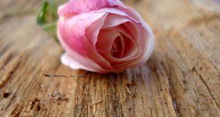 ورود جميلة , صور ازهار رائعه الجمال