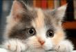 بالصور كيفية تربية القطط , ماهى طرق العنايه بالقط فى المنزل 3079 1 110x75