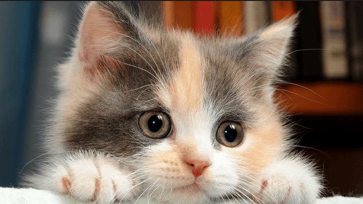 صورة كيفية تربية القطط , ماهى طرق العنايه بالقط فى المنزل