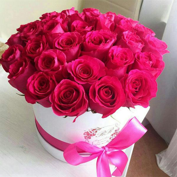 صورة احلى صور ورد , اجمل نبات على وجه الارض الورد