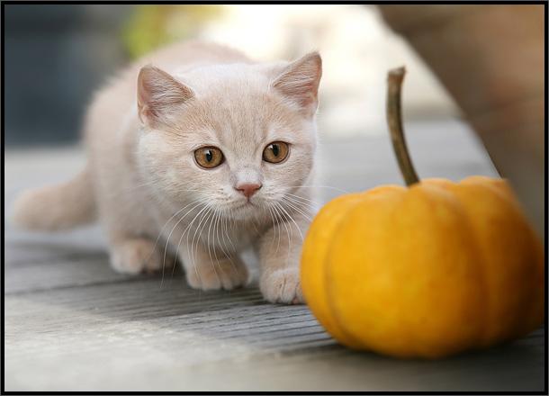 بالصور صور قطط متحركة , ارقى كائنات لطيفة واليفة للمنزل 3782 1