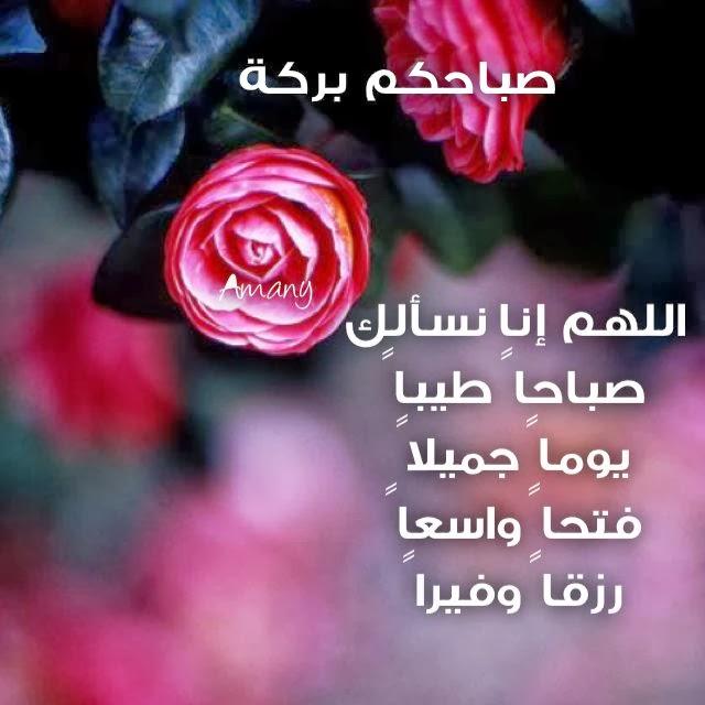 بالصور صباح البركة , اجمل صور صباح الخير 3813 8