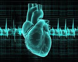 بالصور صور قلب الانسان , اكثر الاعضاء حيوية في الجسم 3893 4