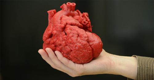 بالصور صور قلب الانسان , اكثر الاعضاء حيوية في الجسم 3893 8