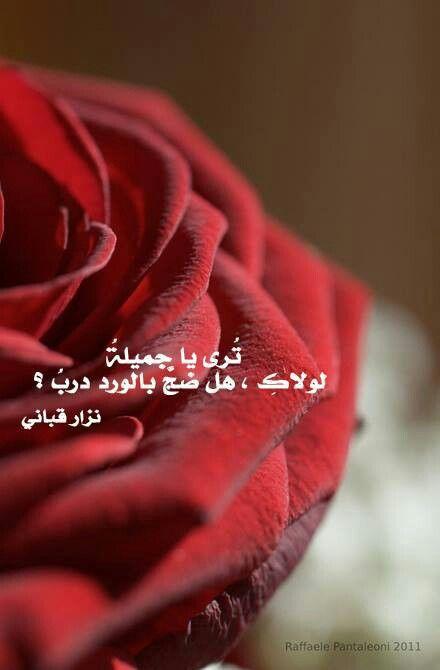 بالصور حكم عن الورد , احلى كلام عن الورد 3897 1