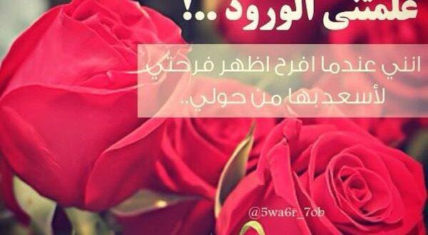 بالصور حكم عن الورد , احلى كلام عن الورد 3897 4