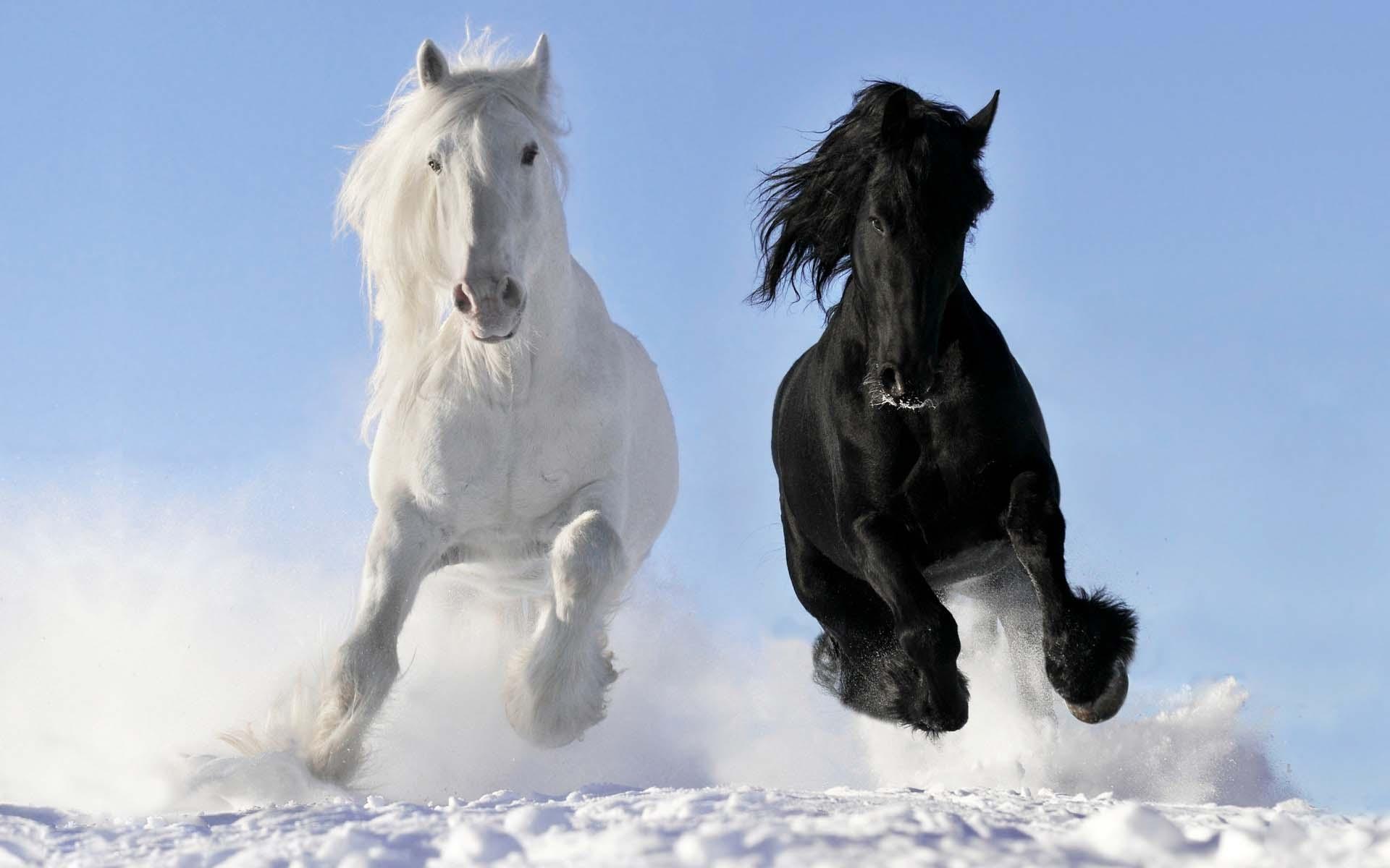 بالصور صور خيل , صور خيول جميلة 4344 1