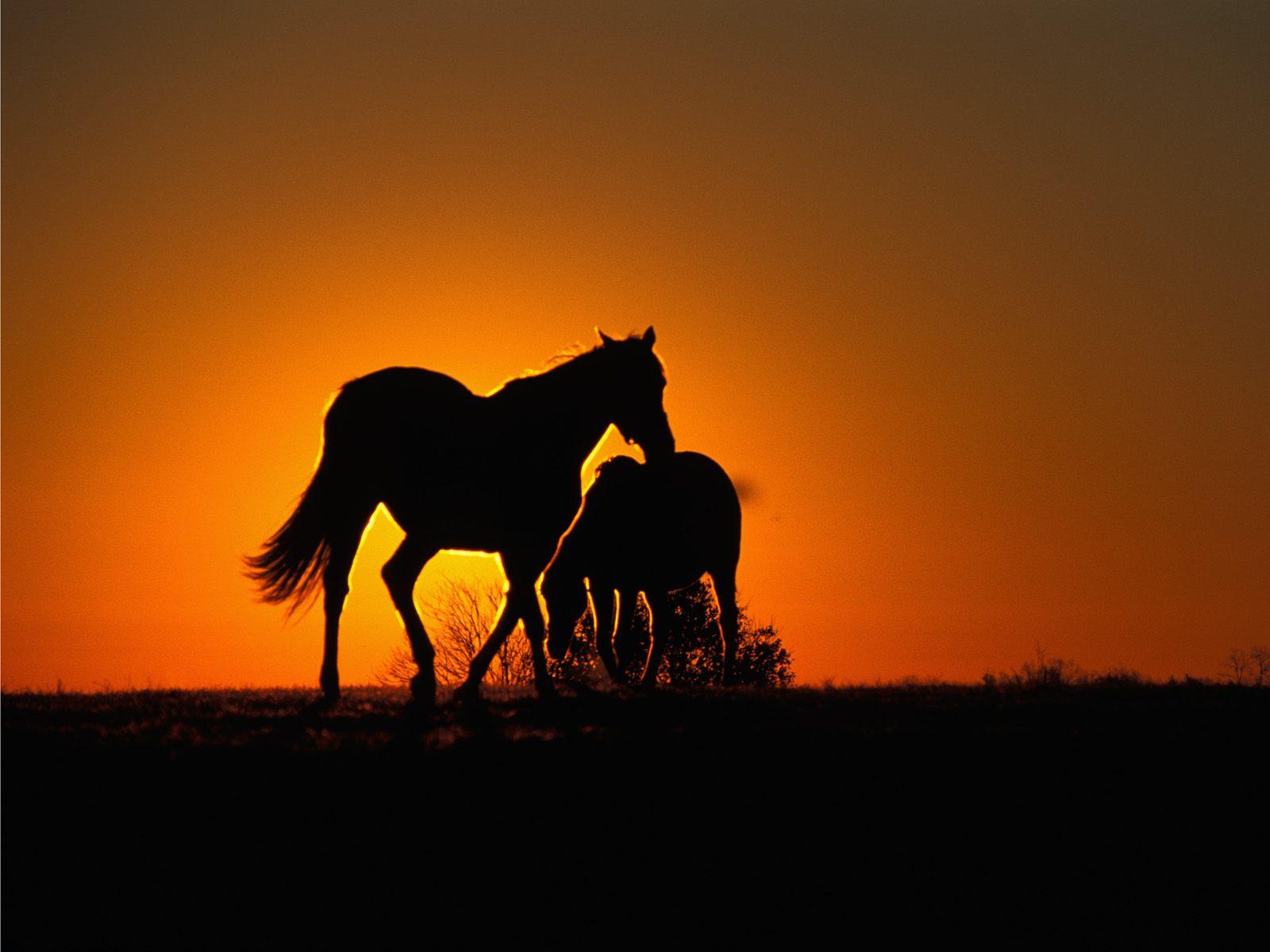 بالصور صور خيل , صور خيول جميلة 4344 10