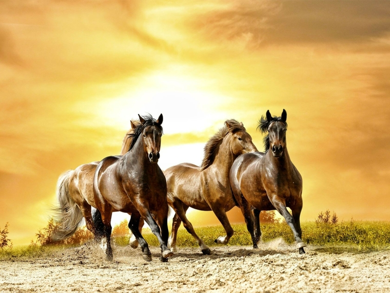 بالصور صور خيل , صور خيول جميلة 4344 13