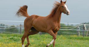 صورة صور خيل , صور خيول جميلة
