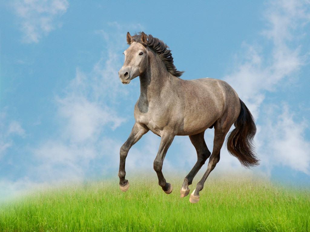 بالصور صور خيل , صور خيول جميلة 4344 2