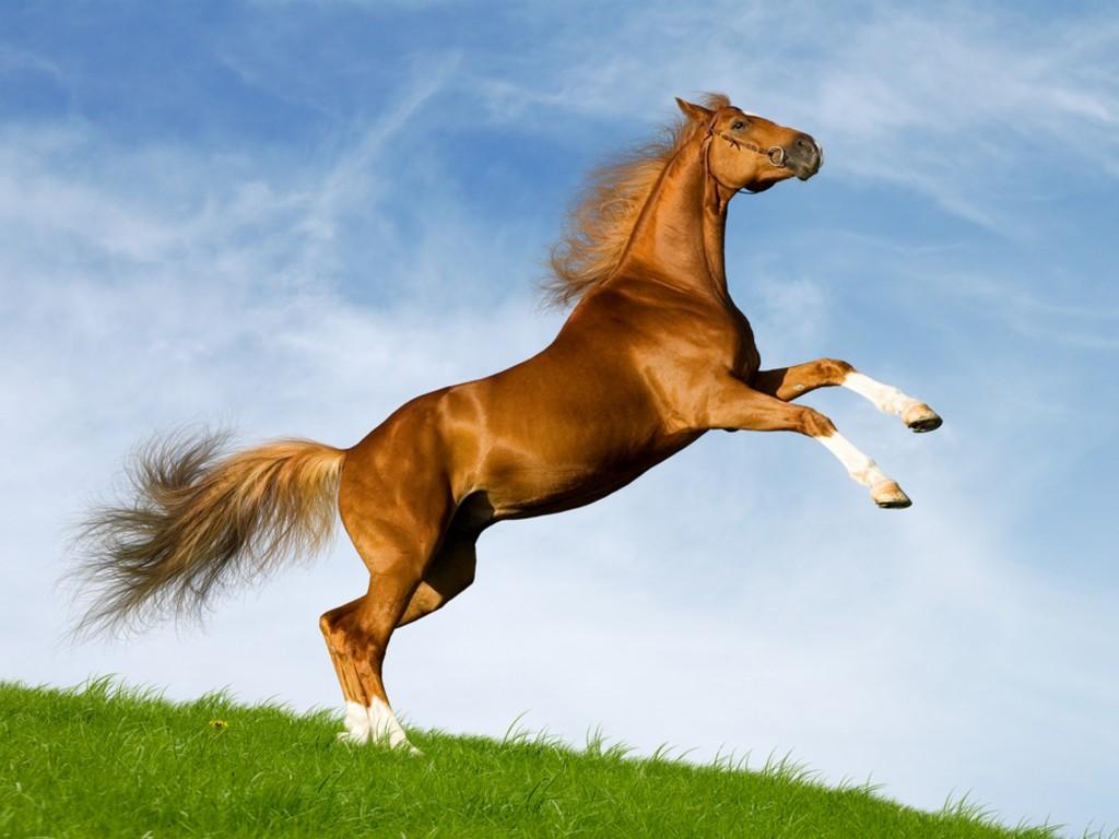 بالصور صور خيل , صور خيول جميلة 4344 3