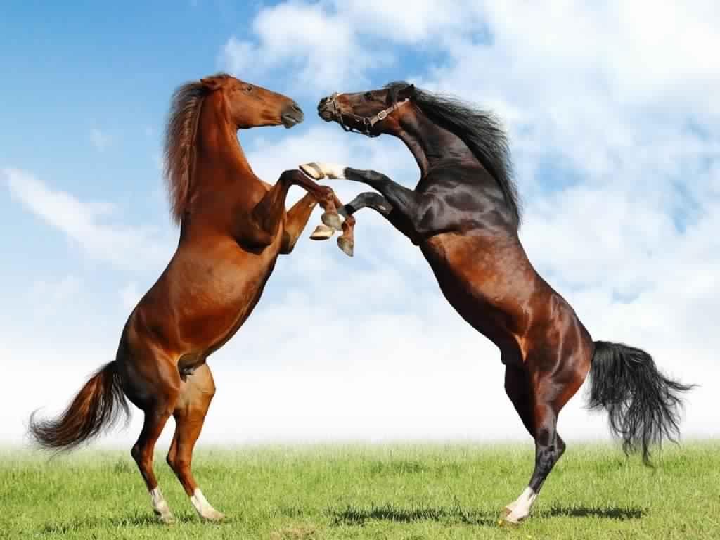 بالصور صور خيل , صور خيول جميلة 4344 5