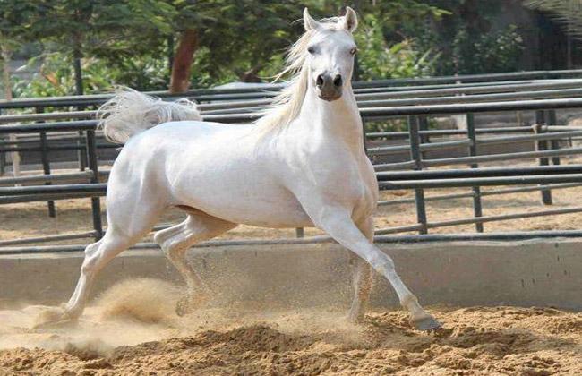 بالصور صور خيل , صور خيول جميلة 4344 6