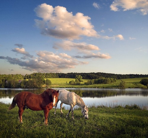 بالصور صور خيل , صور خيول جميلة 4344 7