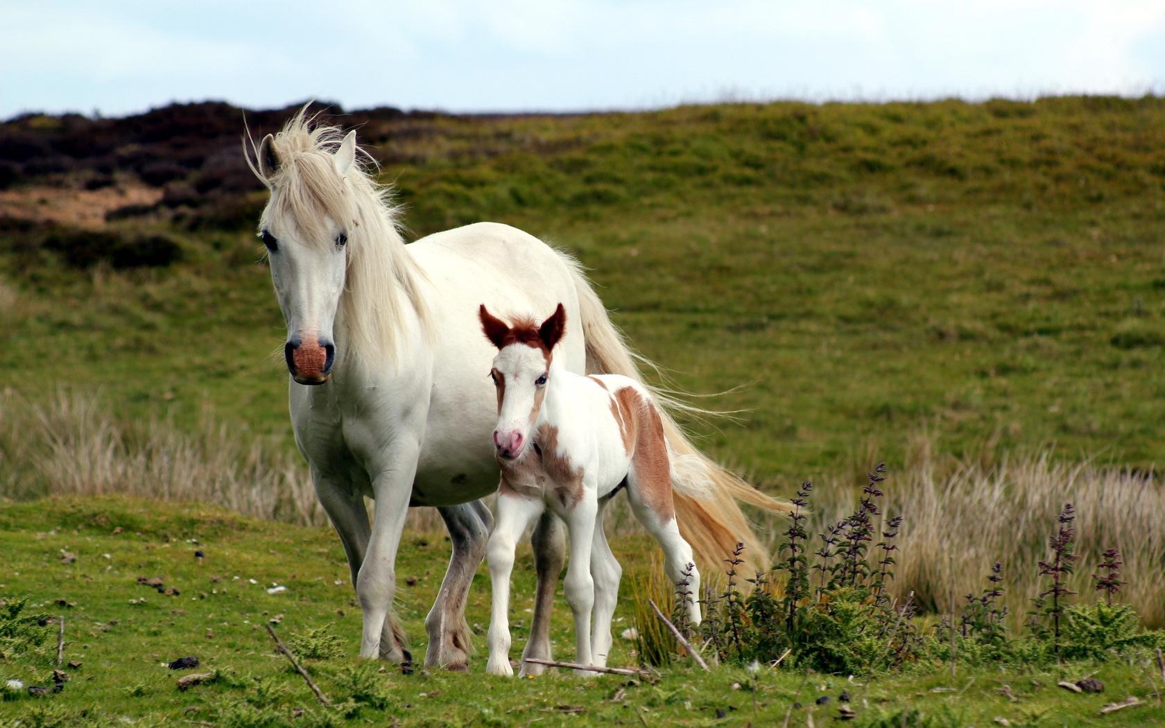 بالصور صور خيل , صور خيول جميلة 4344 8
