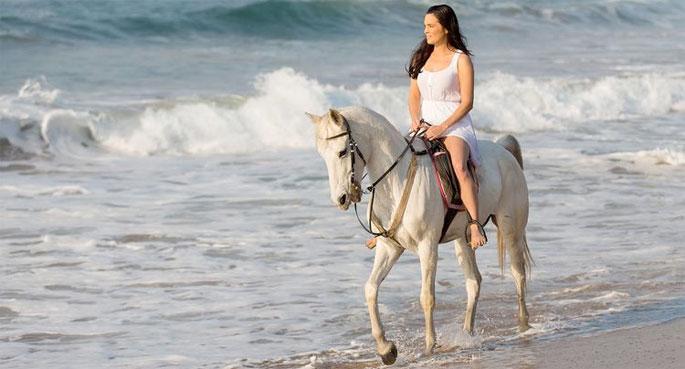 بالصور صور خيل , صور خيول جميلة 4344 9