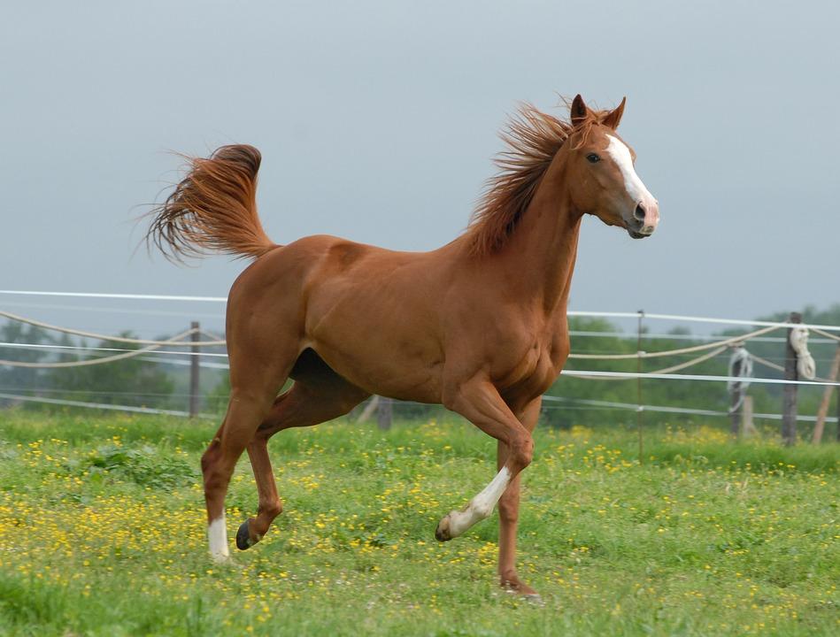 صور صور خيل , صور خيول جميلة