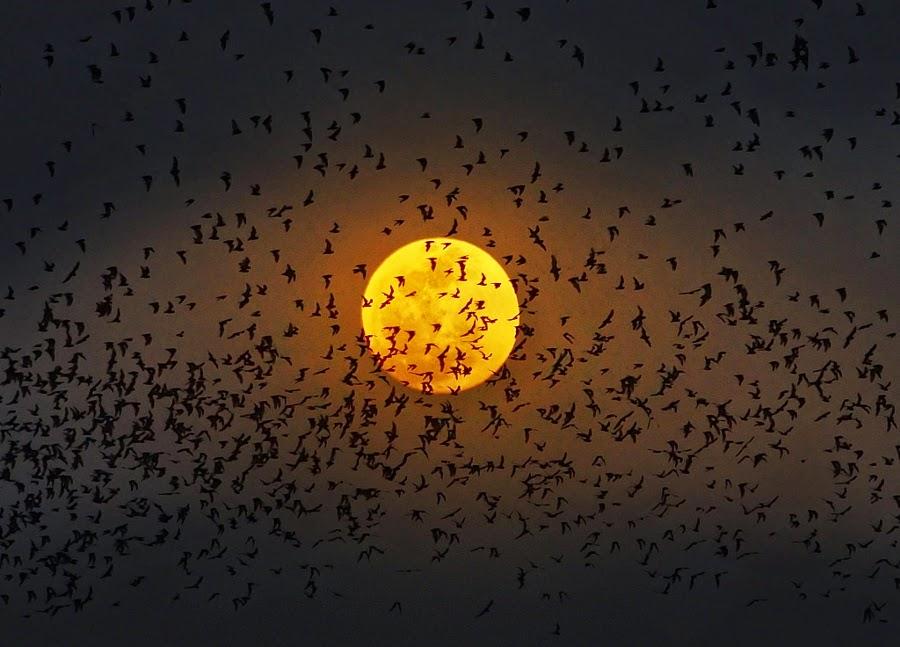 بالصور صور عن القمر , صور رائعه عن جمال القمر 4658 17