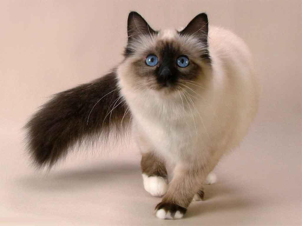 بالصور اجمل الصور للقطط في العالم , صور جميله للقطط حول العالم 4700 11