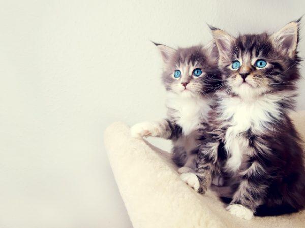 بالصور اجمل الصور للقطط في العالم , صور جميله للقطط حول العالم 4700 12