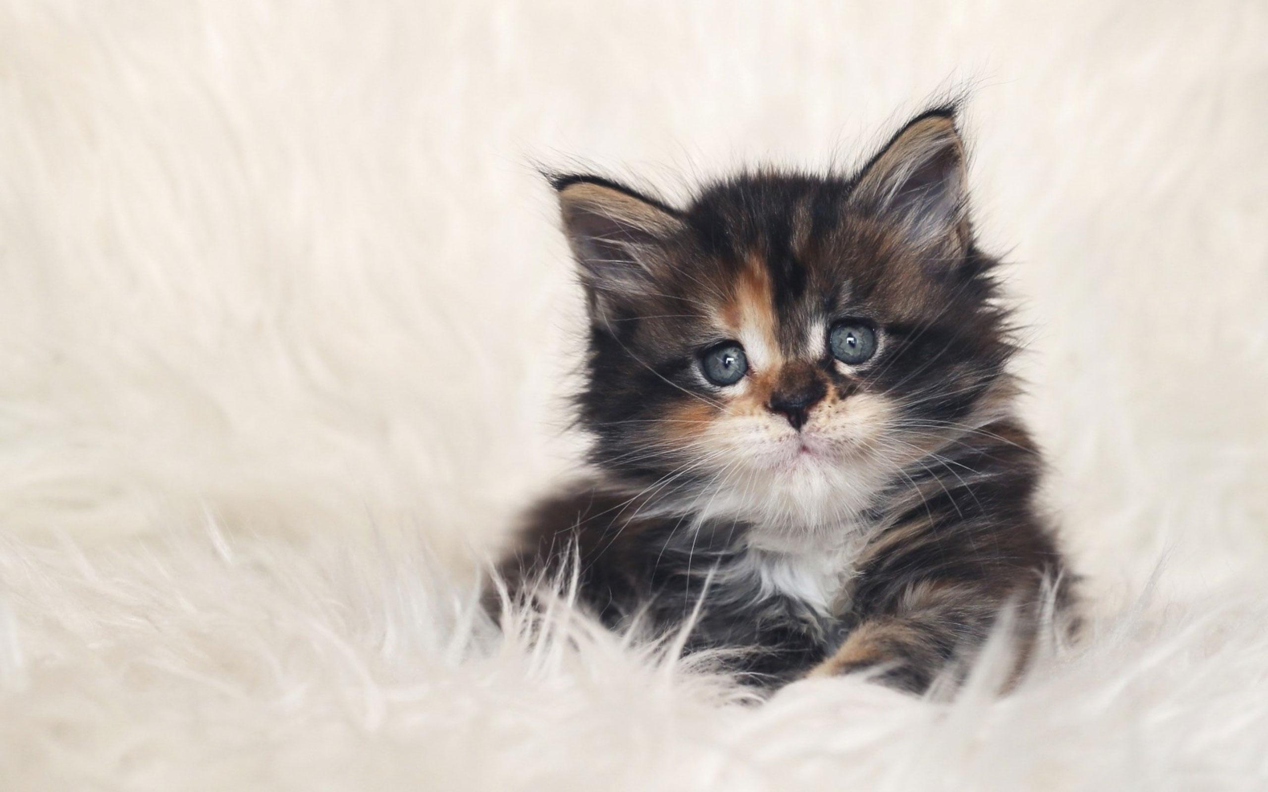 بالصور اجمل الصور للقطط في العالم , صور جميله للقطط حول العالم 4700 13