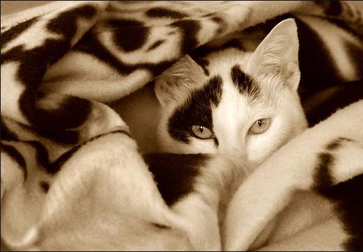بالصور اجمل الصور للقطط في العالم , صور جميله للقطط حول العالم 4700 14