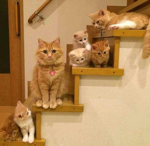 بالصور اجمل الصور للقطط في العالم , صور جميله للقطط حول العالم 4700 15