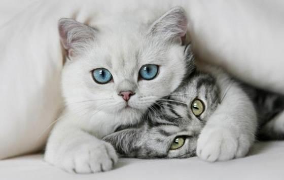 بالصور اجمل الصور للقطط في العالم , صور جميله للقطط حول العالم 4700 18