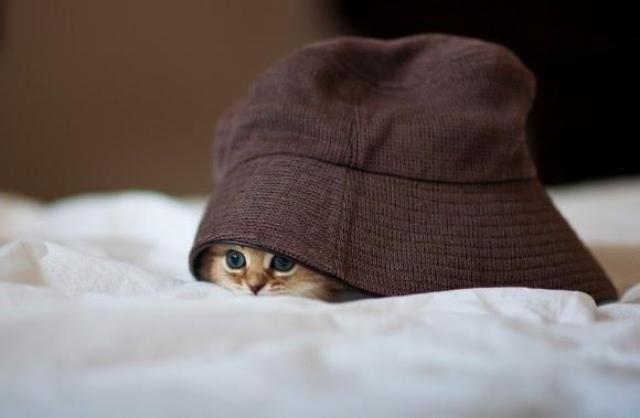 بالصور اجمل الصور للقطط في العالم , صور جميله للقطط حول العالم 4700 19