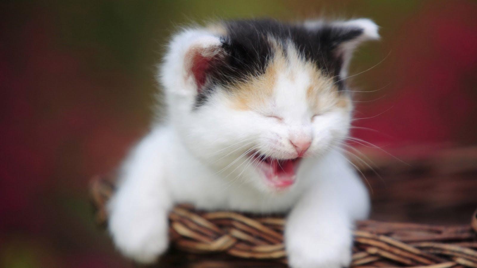 بالصور اجمل الصور للقطط في العالم , صور جميله للقطط حول العالم 4700 2