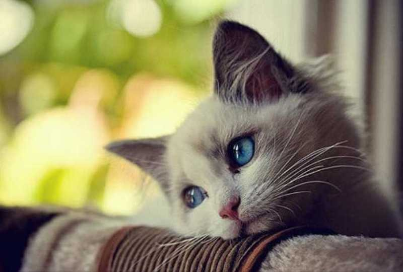 بالصور اجمل الصور للقطط في العالم , صور جميله للقطط حول العالم 4700 3