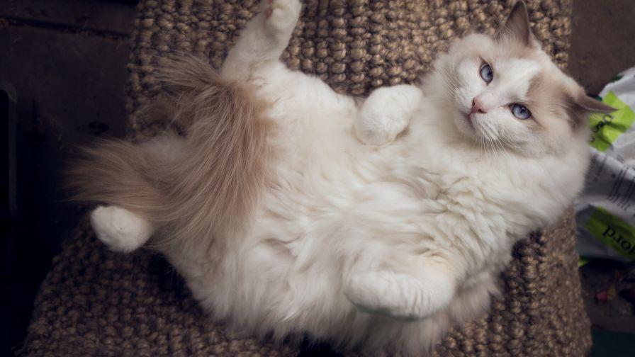 بالصور اجمل الصور للقطط في العالم , صور جميله للقطط حول العالم 4700 6