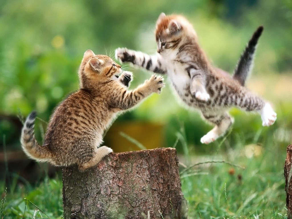 بالصور اجمل الصور للقطط في العالم , صور جميله للقطط حول العالم 4700 7