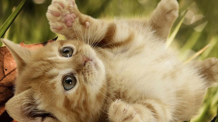بالصور اجمل الصور للقطط في العالم , صور جميله للقطط حول العالم