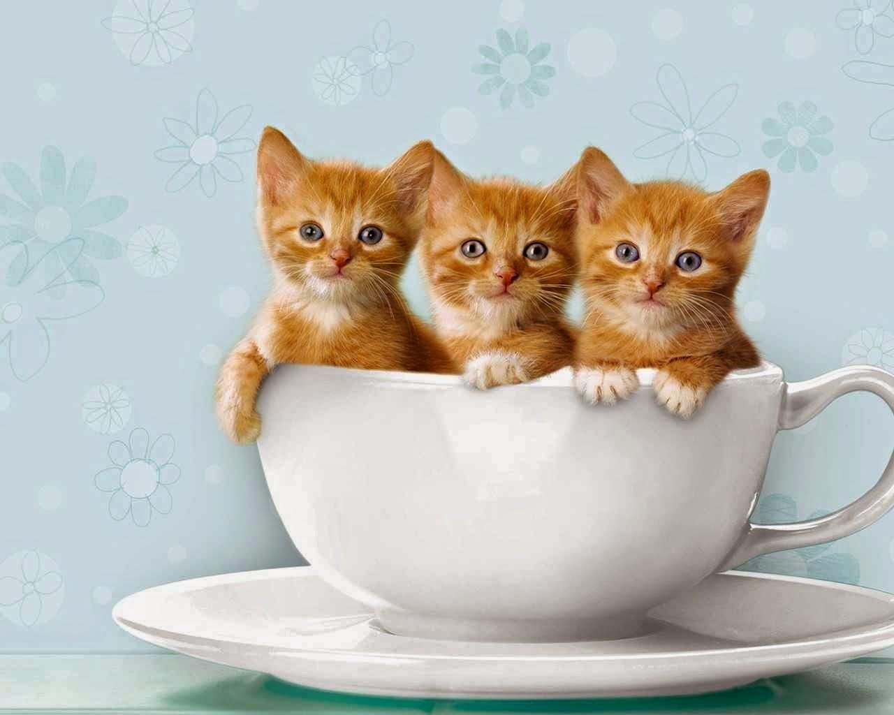 بالصور اجمل الصور للقطط في العالم , صور جميله للقطط حول العالم 4700