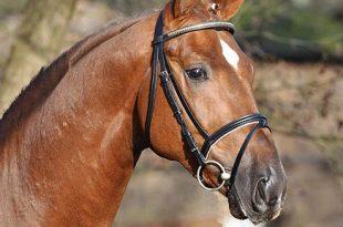 صورة اجمل خيول في العالم , اروع صور خيل