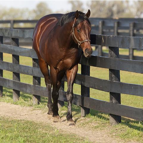 بالصور اجمل خيول في العالم , اروع صور خيل 5319 4