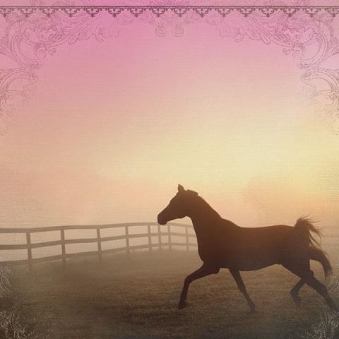 بالصور اجمل خيول في العالم , اروع صور خيل 5319 8