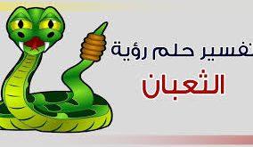 صور تفسير حلم الثعابين في البيت , رؤية الثعبان في المنام