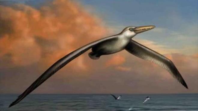 بالصور اكبر طائر في العالم , اغرب الطيور بالعالم 2426 1
