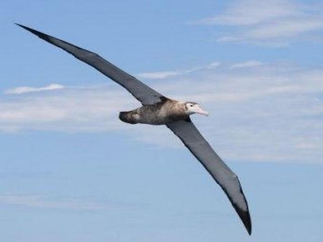 بالصور اكبر طائر في العالم , اغرب الطيور بالعالم 2426