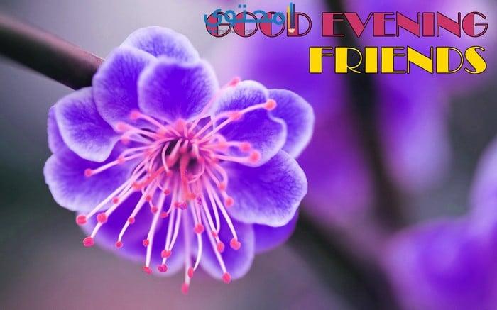صورة صور مساء النور , اجمل وداع للحبيبه 2488