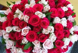 صور صور زهور , اشكال ورود جميلة