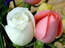 بالصور صور زهور , اشكال ورود جميلة 330 10