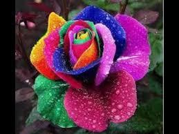 بالصور صور زهور , اشكال ورود جميلة 330 11
